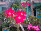 0.Hinh_anh0336.jpg