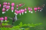 0.flower401.jpg