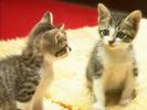 0.CAT_0170.jpg