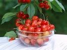 0.Cherry5.jpg