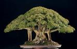 0.art_of_bonsai15.jpg