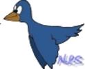 0.bird3.jpg