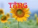 0.tang1_.jpg