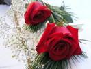 Rosehinhxinh.com_028.jpg