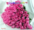 Rose_CHUC_MUNG_NGAY_NHA_GIAO_VN_2011.jpg