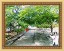 CANH_CHAU_DOC_TU_CHUP_VA_TU_CHINH_222.jpg