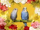 8471_digital_birds_picture.jpg