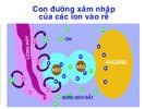 5_con_duong_xam_nhap_ion_vao_re.jpg