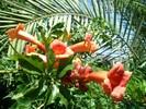 FLOWER_70.jpg