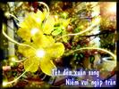 Hoa_mai1.jpg
