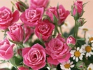 Roses_PHC2.jpg