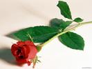 Flower_10088698.jpg