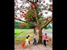 Phuonghong.flv