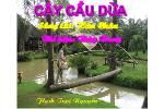 Cay_cau_dua1.swf