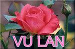 Vu_Lan789594_1218337800.jpg