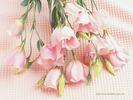 Hoa_cat_tuong.jpg