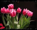 YouTube__Tulips_Overnight.flv