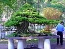 Bonsai18vg_jpg.jpg