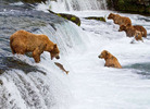 Bear011.jpg