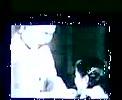 Video0001.flv