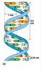 ADN9.jpg