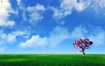 4a91cb17_2a287711_1680x1050_widescreen_wallpaper_1_3__resize.jpg