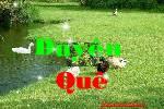 Duyen_que_2.swf