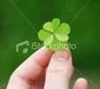 Ist2_5459588_four_leaf_clover.jpg