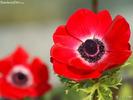 Cool_flower271.jpg