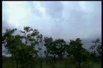 Caycothu.flv