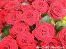 Rose_14.jpg
