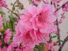 16_hoamai2012.jpg