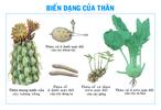Bien_dang_cua_than5.jpg