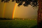 Rainbow21.jpg