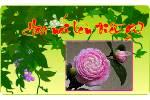 Hoa_noi_len_dieu_gi.swf