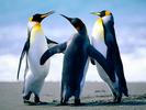 Penguins1.jpg