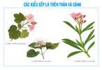 Cac_kieu_xep_la_tren_than_va_canh6.jpg