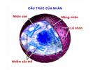 Cau_truc_cua_nhan.jpg
