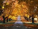 Autumn_road2.jpg