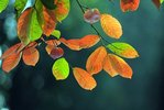 20121010155134_thuhn3.jpg