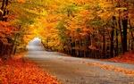 Autumn19.jpg