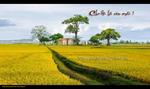 387135_404727756256270_464255219_n_copy.jpg