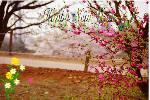 Happy_New_Year_2013_no_sound1.swf