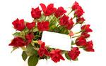 Rose_119.jpg
