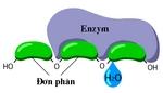 Enzym_noi2.bmp