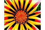 Richard_Clayderman__Flowers_Flowers_Flowers__YouTube.swf