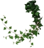 Ivy_2_by_waitforawhiled53s75a.png