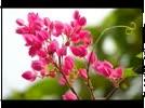 Hai_sac_hoa_Tigon_Tho_TTKh_nhac_Anh_Bang__Nhu_Quynh__YouTube.flv