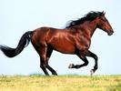 Horse134551390275475.jpg