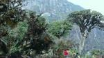 Trekking_Bach_Moc_Luong_Tu.flv